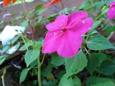 güzel bir çiçek