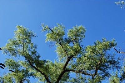 Ağacın zirve güzelliği