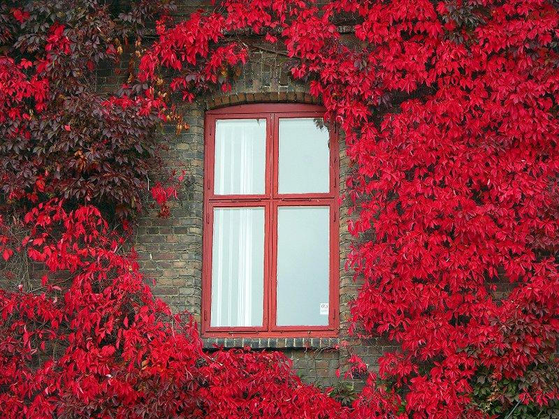 Çiçek ve pencere