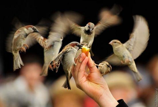 kuşlar ve insan
