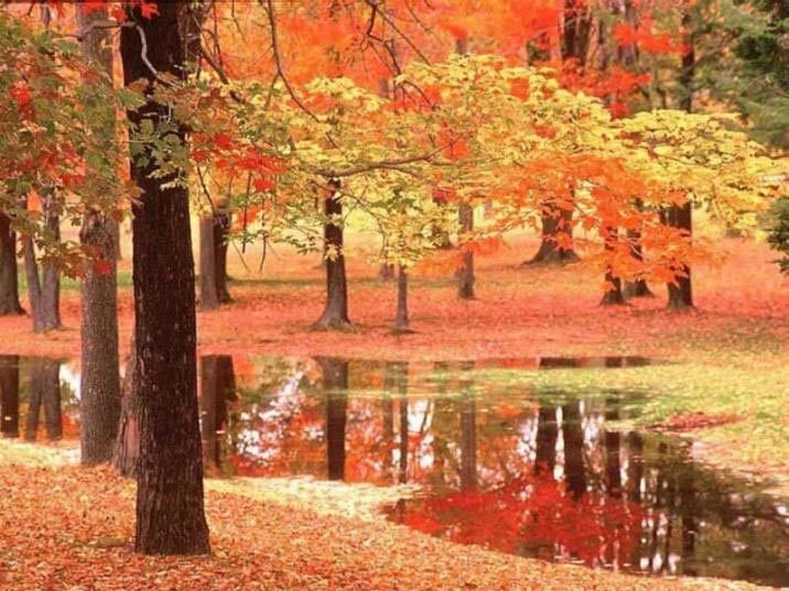 Sonbahar manzarası