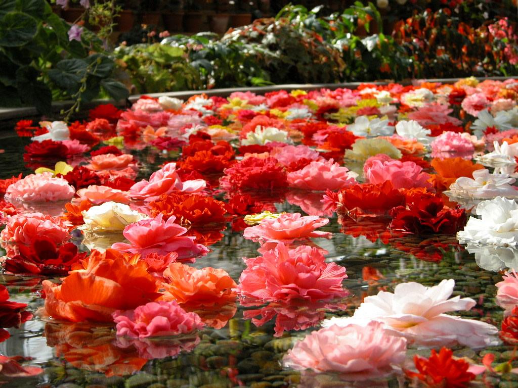 Çiçek bahçeleri