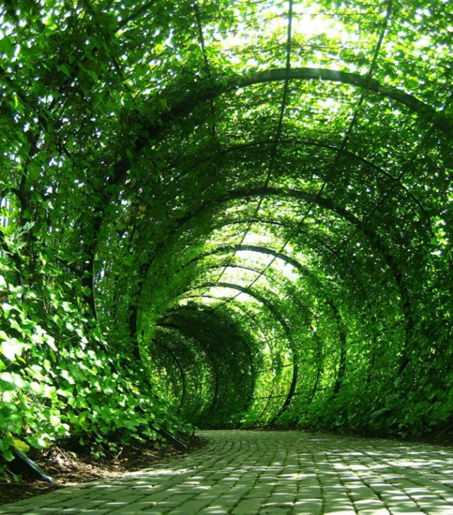 tünel ve peyzaj