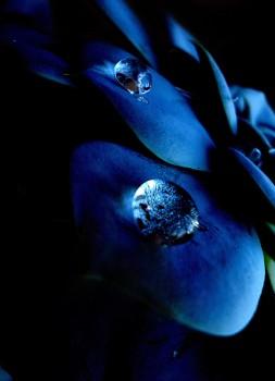 mavi düş(üş)