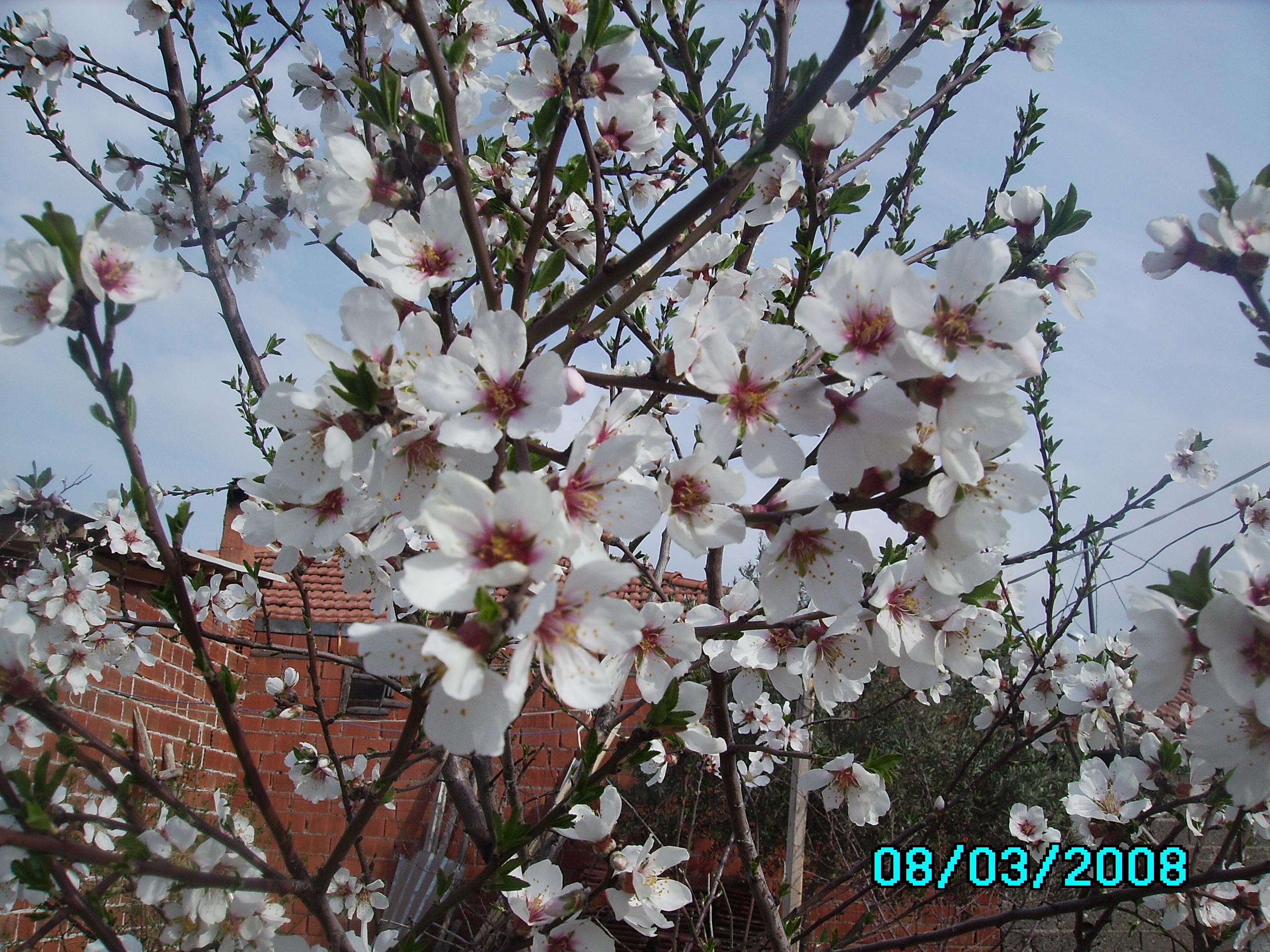 baharın ilk çiçeği