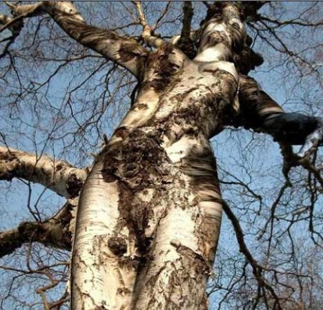 Sizce bu Ağaç neye benziyor?